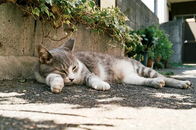 猫撮り散歩2466