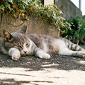Photos: 猫撮り散歩2466