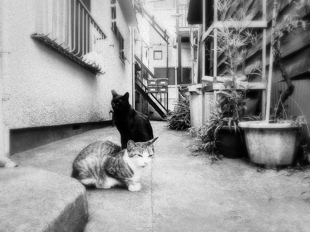 猫撮り散歩2467