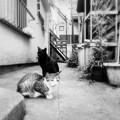 Photos: 猫撮り散歩2467