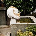 Photos: 猫撮り散歩2468