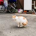 猫撮り散歩2471