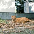 猫撮り散歩2474