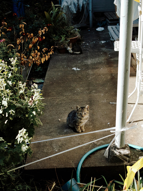 Photos: 猫撮り散歩2478