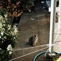 猫撮り散歩2478