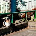猫撮り散歩2479