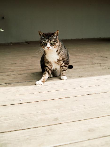 Photos: 猫撮り散歩2482