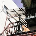 Photos: 猫撮り散歩2484
