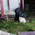 Photos: 猫撮り散歩2487