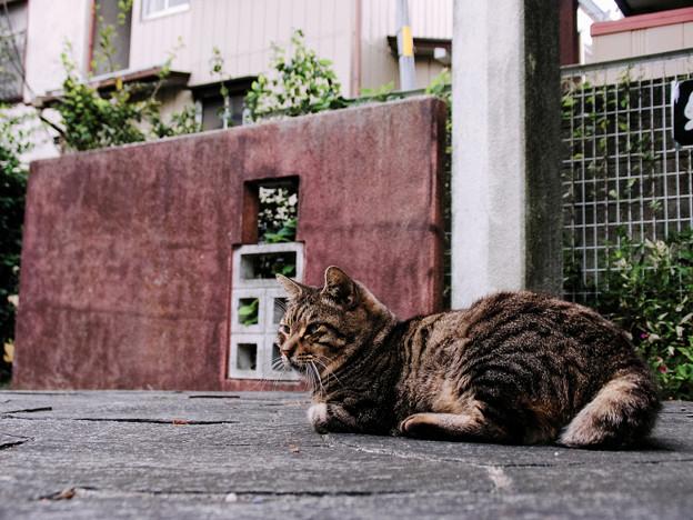 猫撮り散歩2488