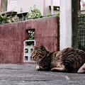 Photos: 猫撮り散歩2488