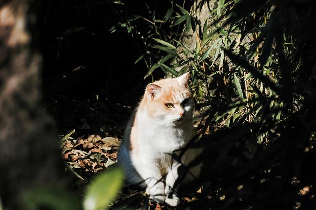 猫撮り散歩2489