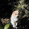 Photos: 猫撮り散歩2489