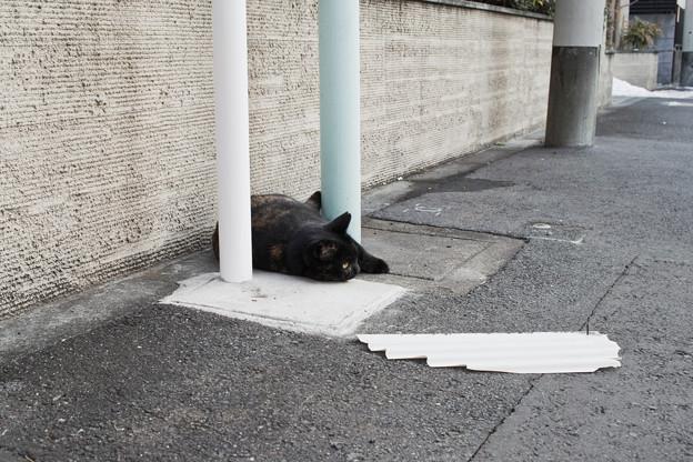 猫撮り散歩2490