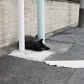 Photos: 猫撮り散歩2490
