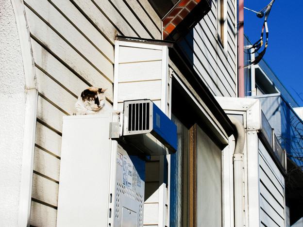 猫撮り散歩2491