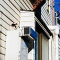 Photos: 猫撮り散歩2491
