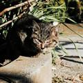 猫撮り散歩2492