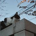猫撮り散歩2493