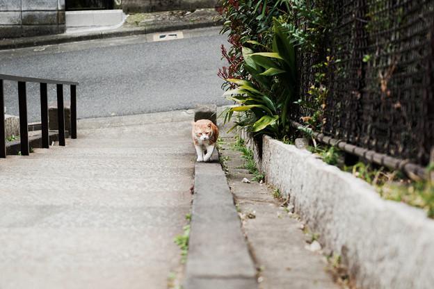猫撮り散歩2494