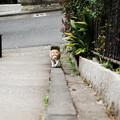Photos: 猫撮り散歩2494