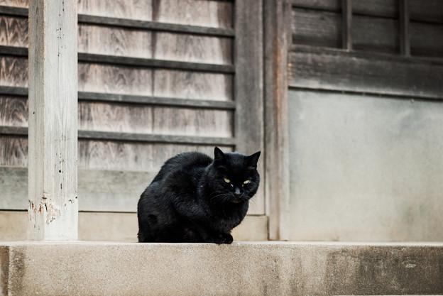 猫撮り散歩2495