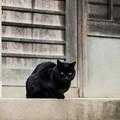 Photos: 猫撮り散歩2495