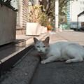 猫撮り散歩2496