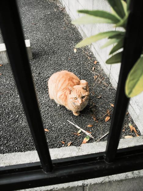 猫撮り散歩2497