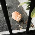 Photos: 猫撮り散歩2497