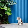 猫撮り散歩2498