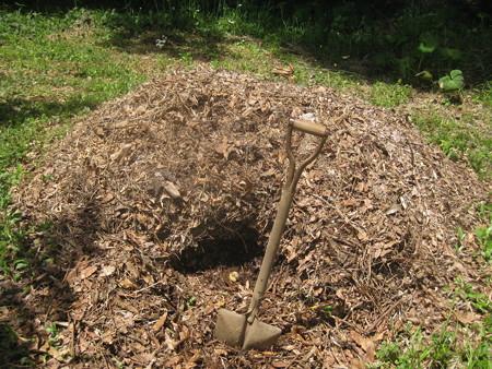 堆肥からカブト幼虫、スズメバチをバトミントンで の巻