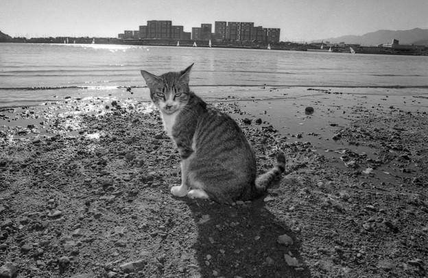 Photos: 捨て猫の浜02