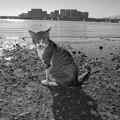 捨て猫の浜02