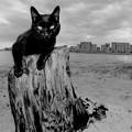 捨て猫の浜03