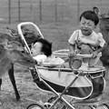 Photos: 昭和の思い出