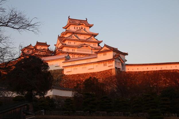 Photos: 夕陽色の?路城