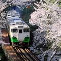 写真: 桜の中を行くキハ40系