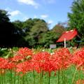 写真: 彼岸花と結縁寺