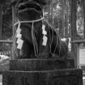 御岩神社 狛犬(凱旋記念)