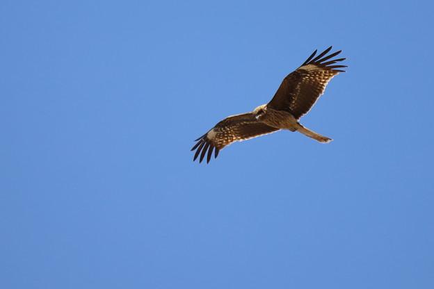 鵜の目鷹の目