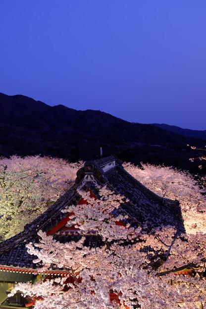 雨引観音 仁王門の桜