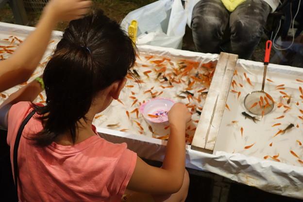 Photos: 金魚すくい
