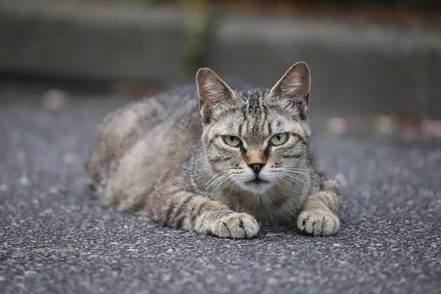 カリスマ猫