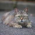 Photos: カリスマ猫