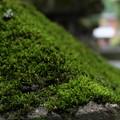 Photos: 苔むした石灯籠