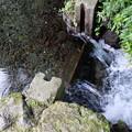 湧玉池の水