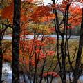 観音沼森林公園2020