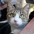 Photos: おねだり猫