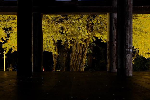 新宮熊野神社長床 夜